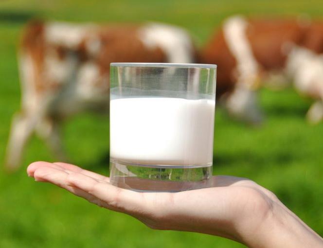 Got de llet